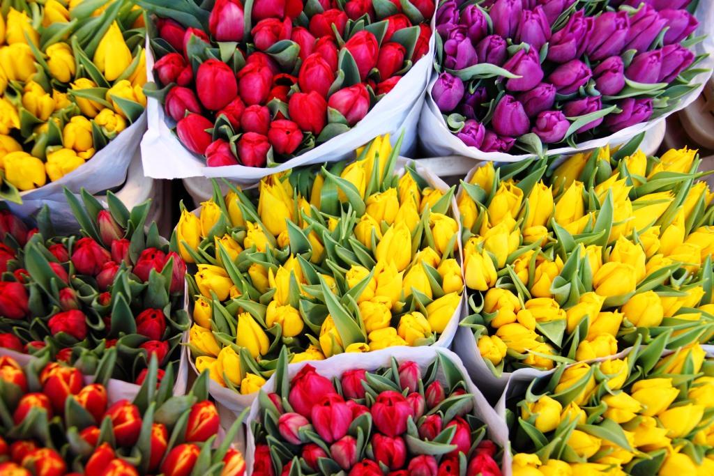 Apa Saja Pilihan Bunga Yang Ada Di Toko Bunga Online?